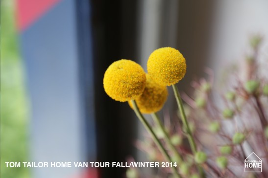 VAN-TOUR_FALL_2014_11