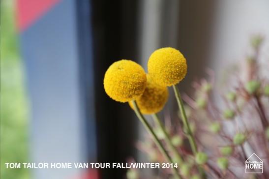 VAN-TOUR_FALL_2014_11